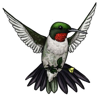 Hummingbird clipart Green about Tattoo Picture clipart