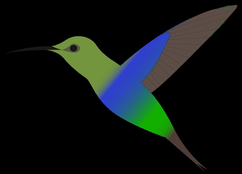 Hummingbird clipart Clipart kid hummingbird art clipart