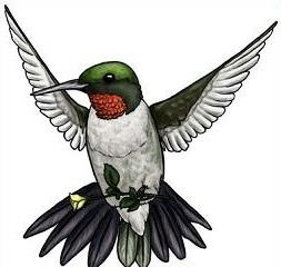 Hummingbird clipart Hummingbird Clipart Hummingbird Free