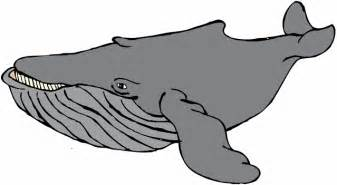 Humpback Whale clipart Clipart > for White Humpback