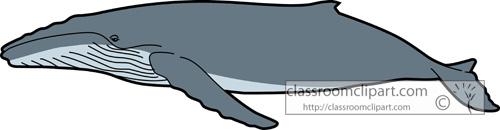 Humpback Whale clipart Clipart Humpback photo#6 clipart Whale