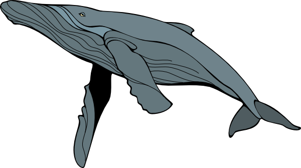 Humpback Whale clipart Images humpback%20whale%20clipart Clipart Clipart Free