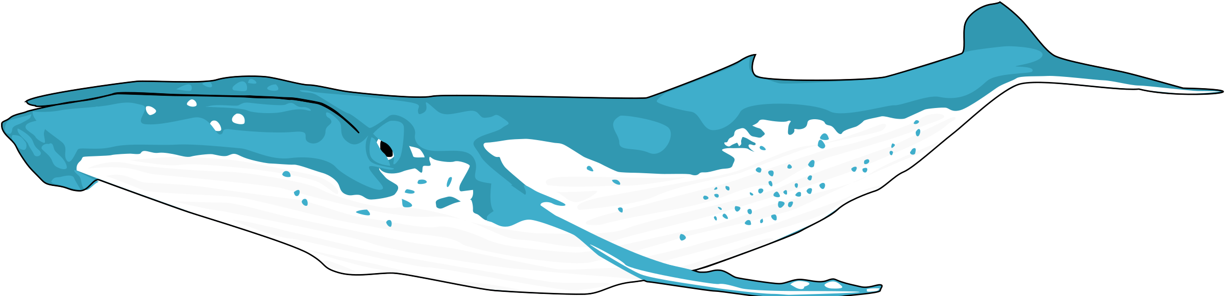 Blue Whale clipart whaling Humpback Clipart whale humpback whale