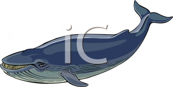 Blue Whale clipart humback Clip Clip photo#28 Humpback Art