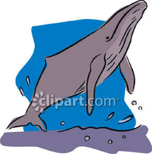 Humpback Whale clipart cute Swimming To the Picture To