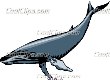 Humpback Whale clipart humback Whale Whale Humpback illustration Humpback