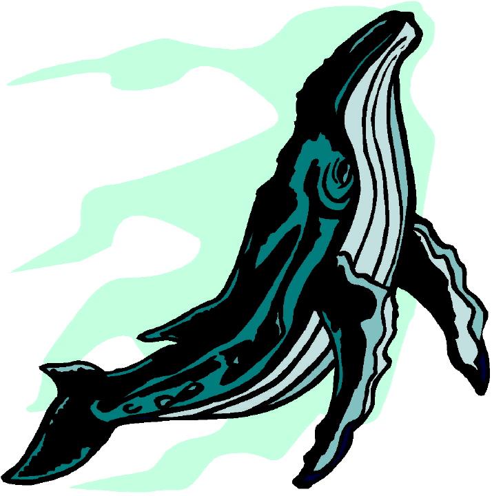 Humpback Whale clipart humback Whale Humpback Clip Humpback clip