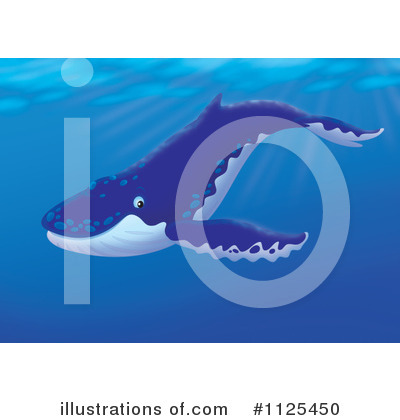 Humpback Whale clipart humback Free by Humpback Alex Clipart