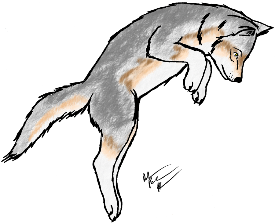 Wolf clipart wolf pup Clipart Gray Free Wolf