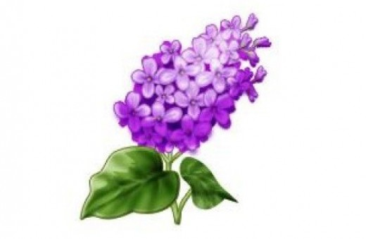 Hyacinth clipart Download Pink Hyacinth Clipart Clip