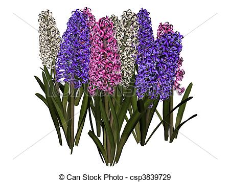 Hyacinth clipart  flower hyacinth Search Drawing