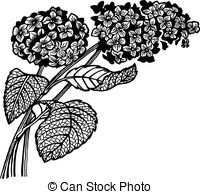 Hydrangea clipart 152 EPS floewrs with and