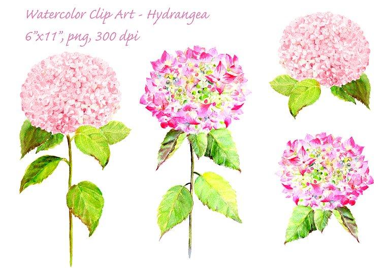 Hydrangea clipart Creative on Market Hydrangea