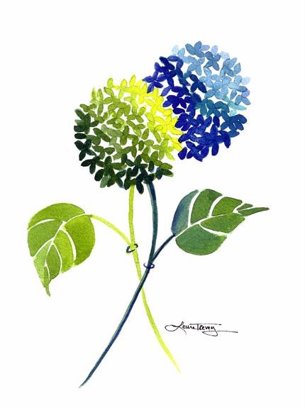 Hydrangea clipart Clipart  Hydrangea Blue