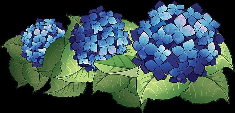 Hydrangea clipart Clip Flowers Art Hydrangeas Clip