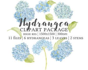 Hydrangea clipart Graphic Hydrangea Hydrangea Watercolor Hydrangea