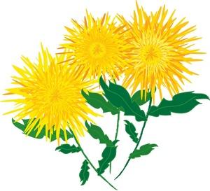 Yellow Flower clipart chrysanthemums Flower yellow art Pictures chrysanthemum