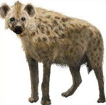 Hyena clipart Clipart Hyena Free Hyena