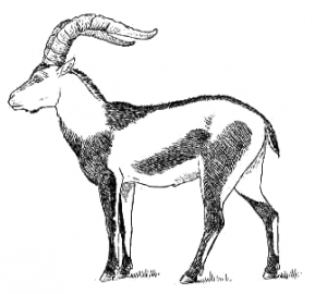 Ibex clipart Clipart Ibex Pyrenean Ibex Art
