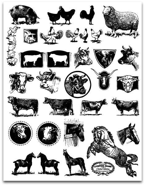 Iiii clipart animal number Livestock Pinterest by com Cathe