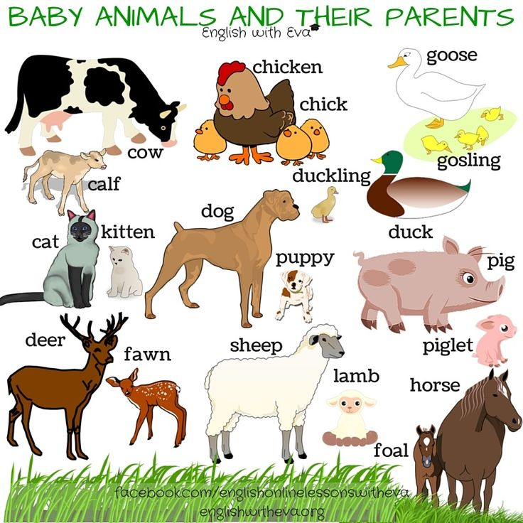 Iiii clipart cow Baby 1785 Names Their best