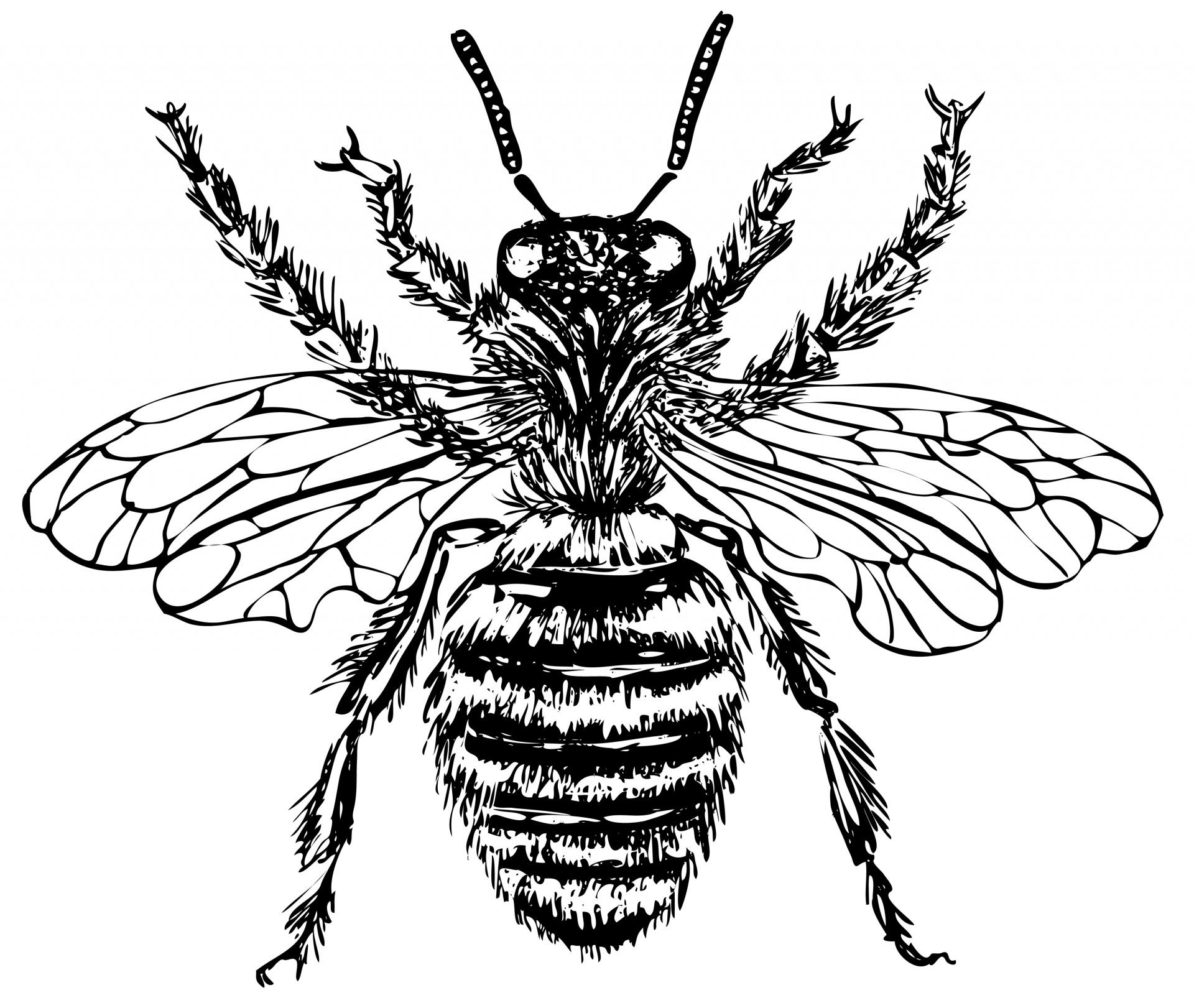 Illustration clipart bee Stock Bee Illustration Photo Free