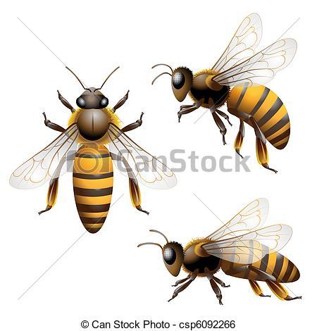 Illustration clipart bee  Honey Clip white Art