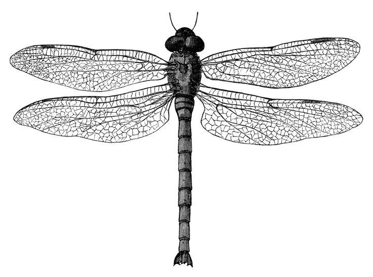 Illustration clipart black and white Art clip dragonfly old vintage