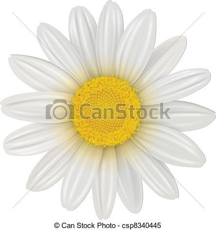 Illustration clipart daisy Clipart Vector chamomile  Daisy