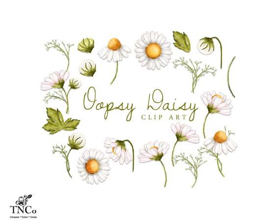 Illustration clipart daisy Watercolour daisies flower illustration Watercolour