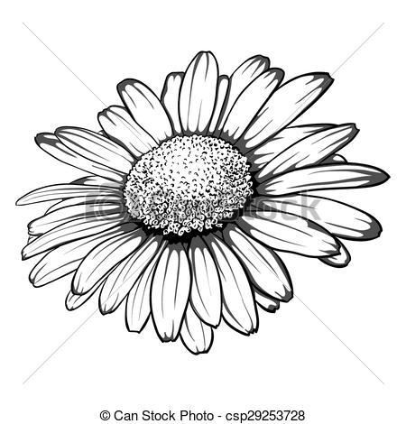 Illustration clipart daisy White daisy black daisy Vector