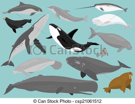 Illustration clipart mammal Marine Mammals Marine Mammals of