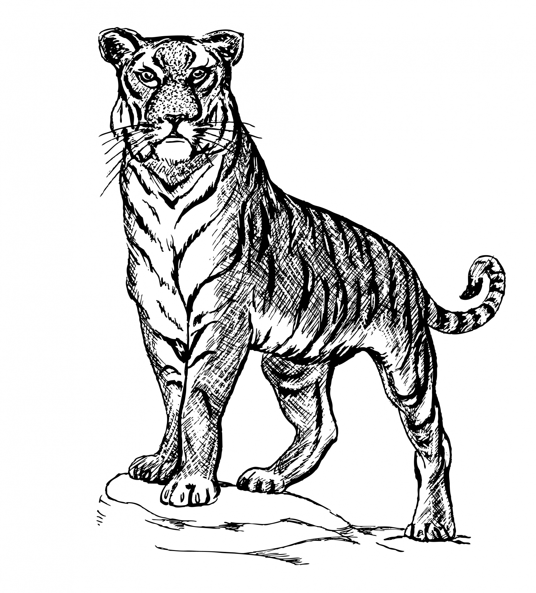Illustration clipart mammal Domain Illustration Stock Pictures Free