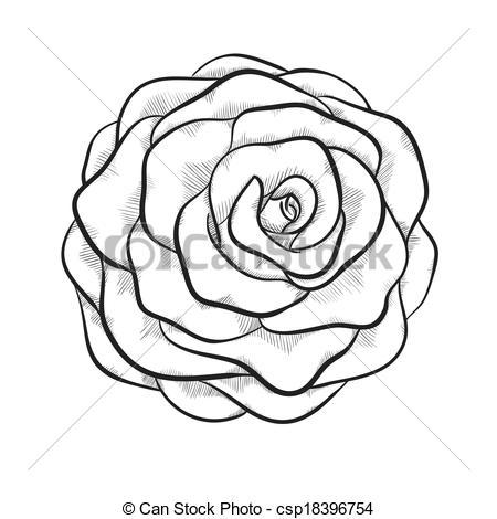 Illustration clipart rose Rose  rose Vector beautiful