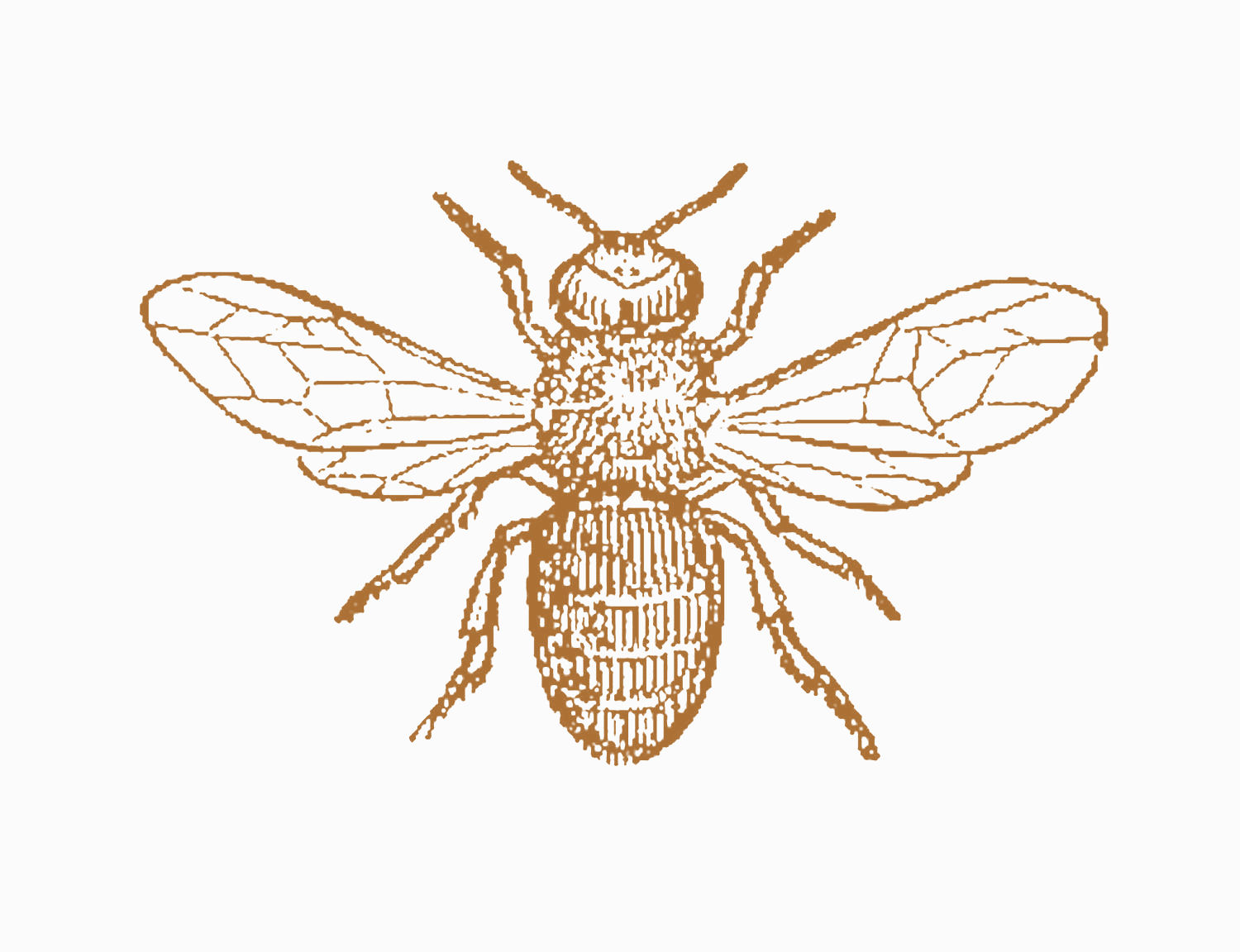 Science clipart bee #14