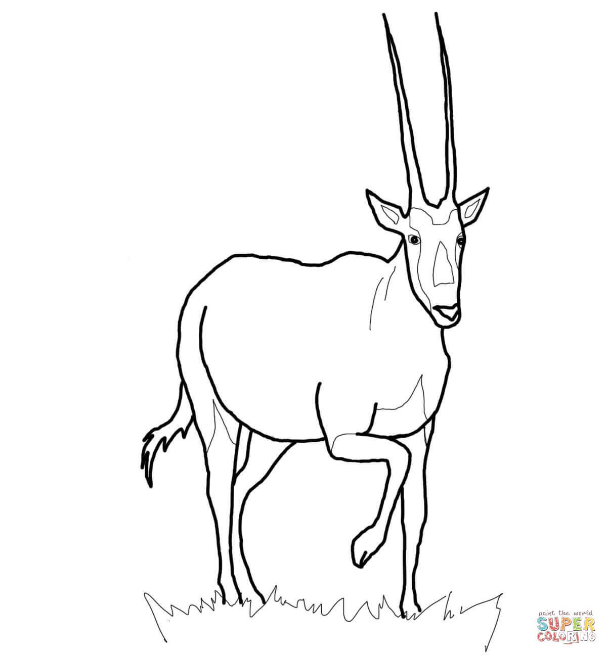 Oryx clipart Printable Realistic Free Coloring Oryx