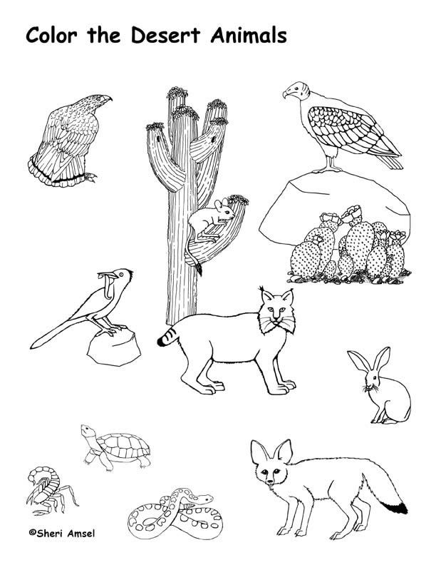 Drawn cactus desert animal 25+ ideas Animals Page Desert