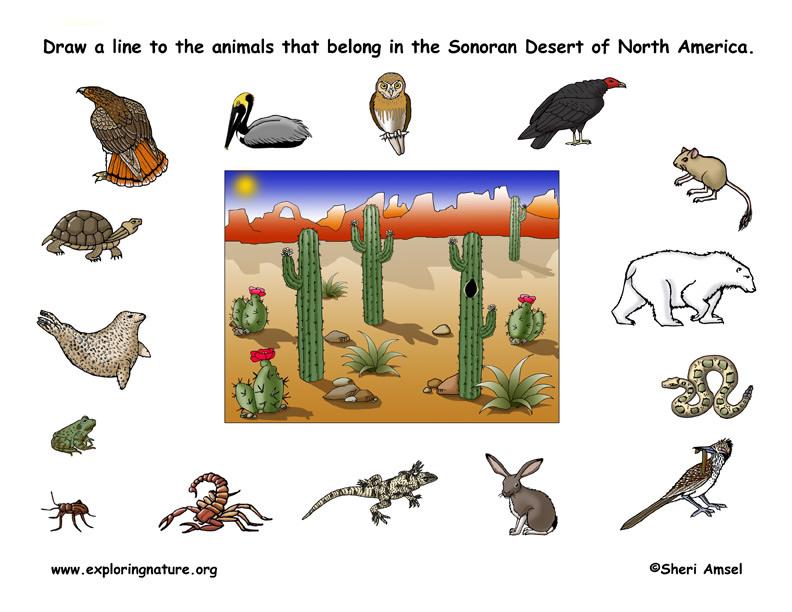 In The Desert clipart adaptation Kids  matching desert habitat