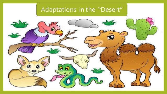 In The Desert clipart adaptation Grade Adaptation Adaptations 13 structure