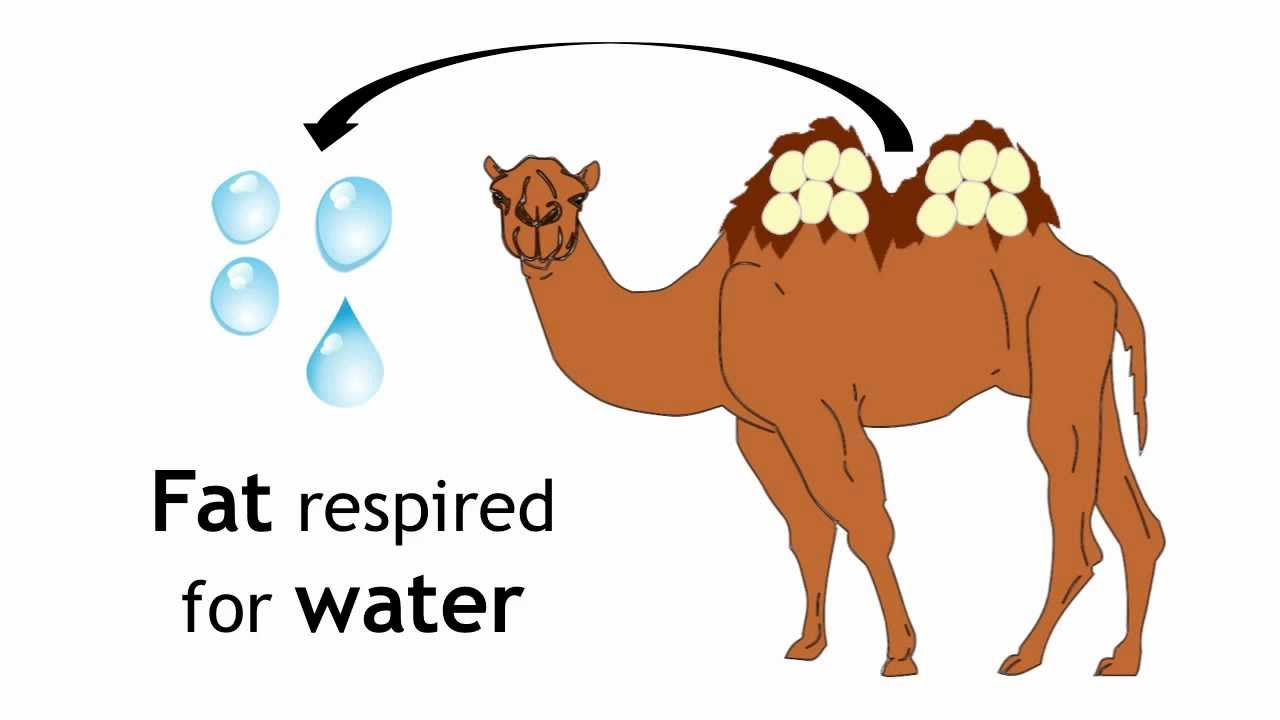 In The Desert clipart adaptation Cliparts Adaptations Environment Cliparts Zone