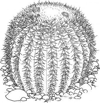 In The Desert clipart barrel cactus Printables 17 on Golden Pinterest