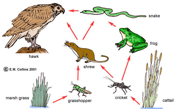 In The Desert clipart biology Complex Manual textbooks arrows numerous
