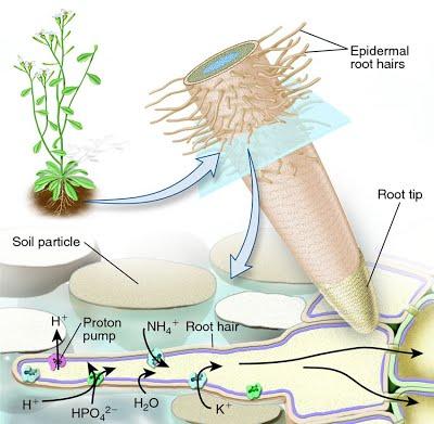 In The Desert clipart biology Http:// in June (5) 1