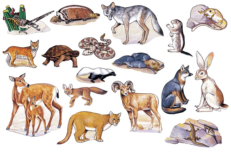 In The Desert clipart biology About Biome and 14 Animals