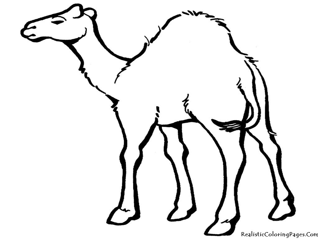 In The Desert clipart desert animal Animals Art Desert Of Camel