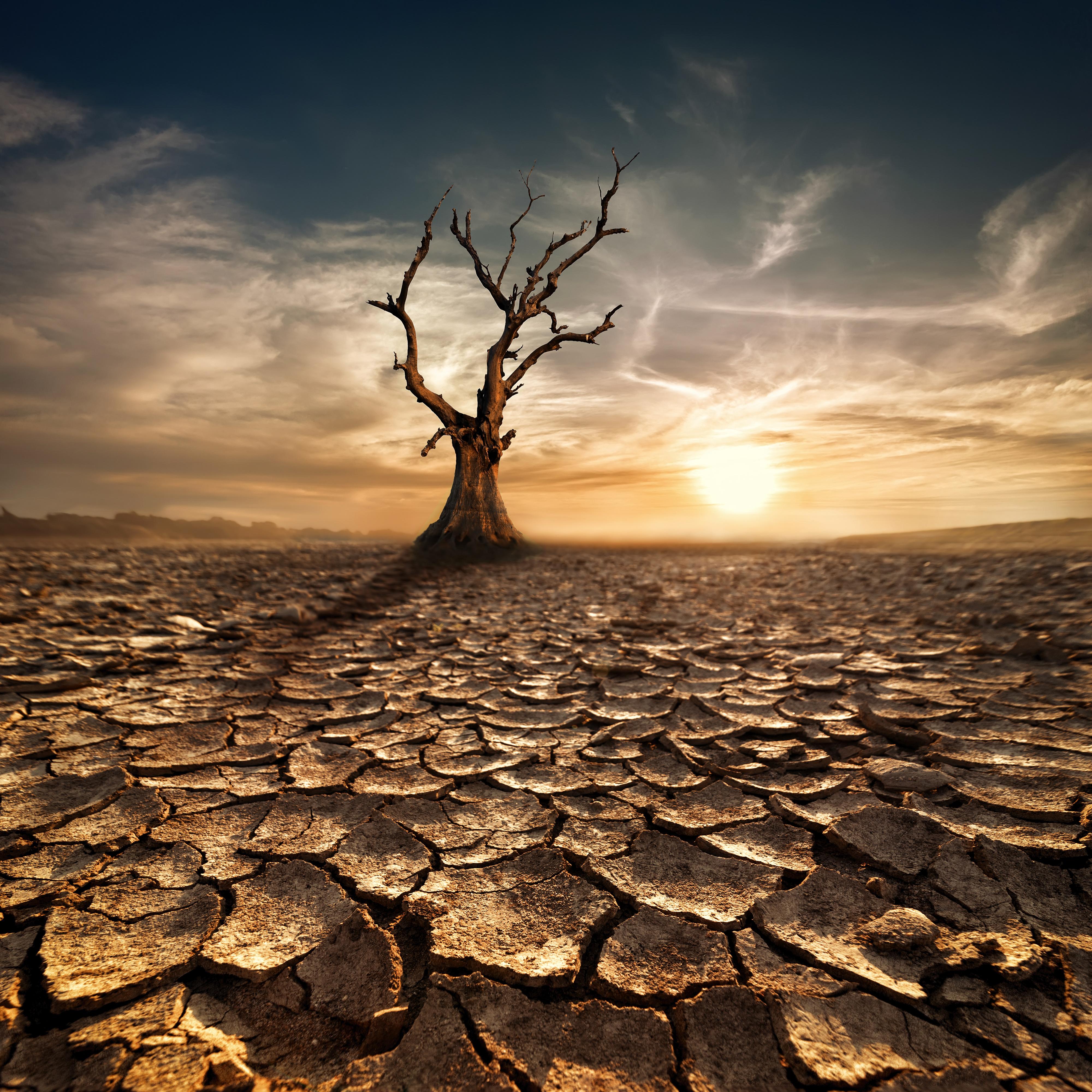 In The Desert clipart desert background Size Quality Background Yopriceville Desert