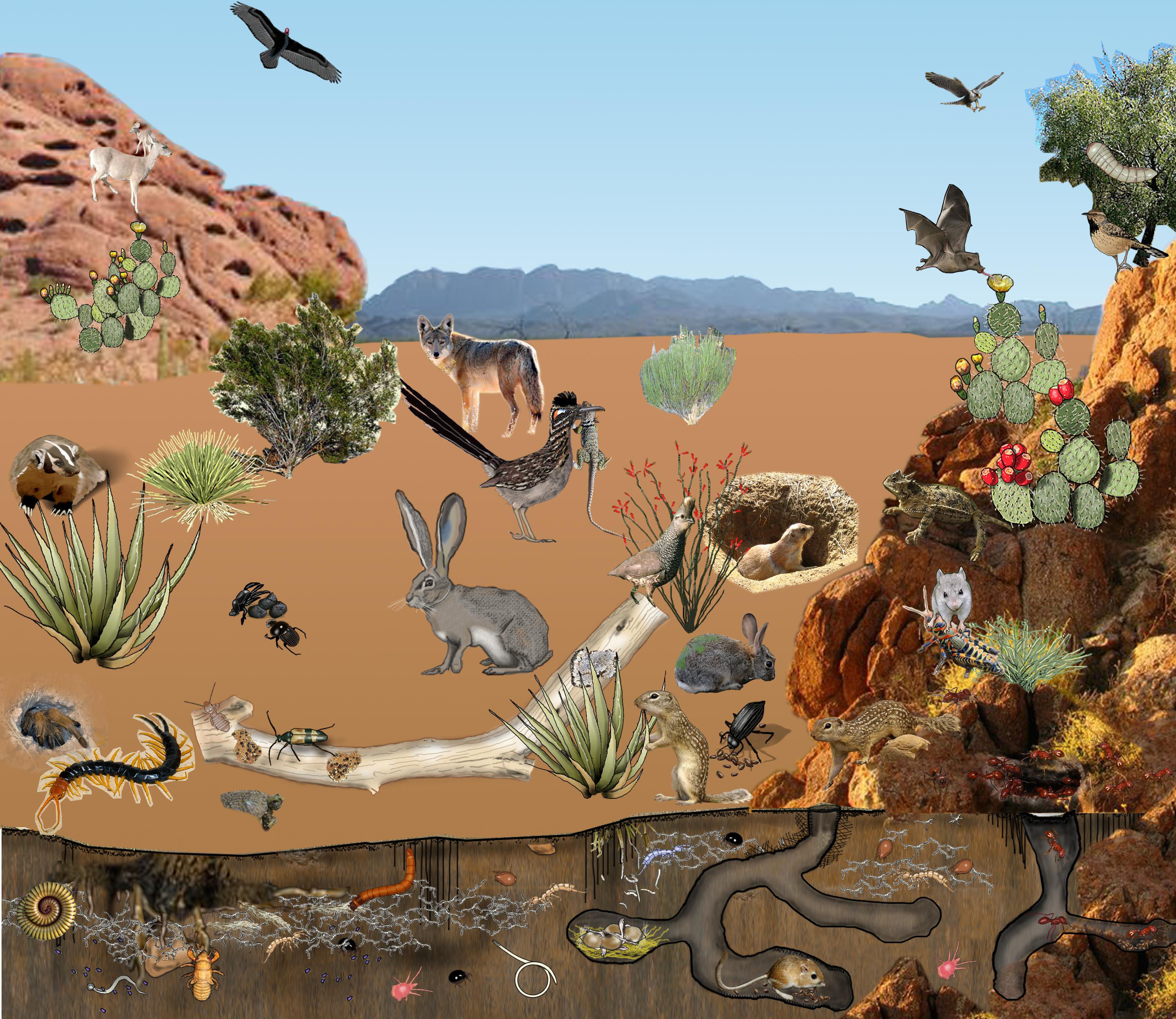 In The Desert clipart desert ecosystem Consumers Desert Web Chains Web