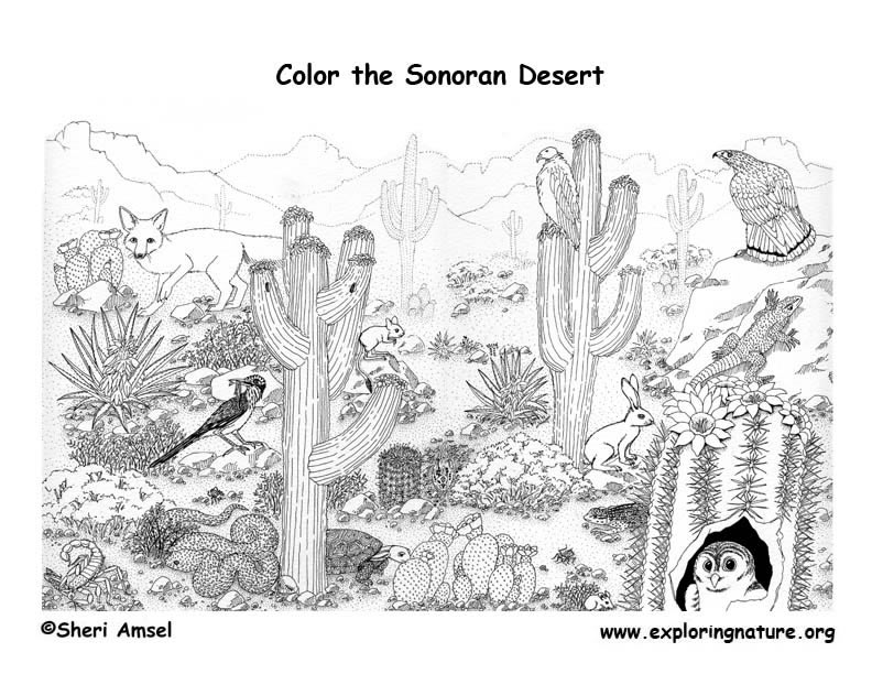 In The Desert clipart desert ecosystem #5 Download drawings coloring coloring