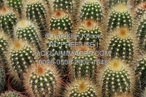 In The Desert clipart desert plant Desert cactus · photos plants