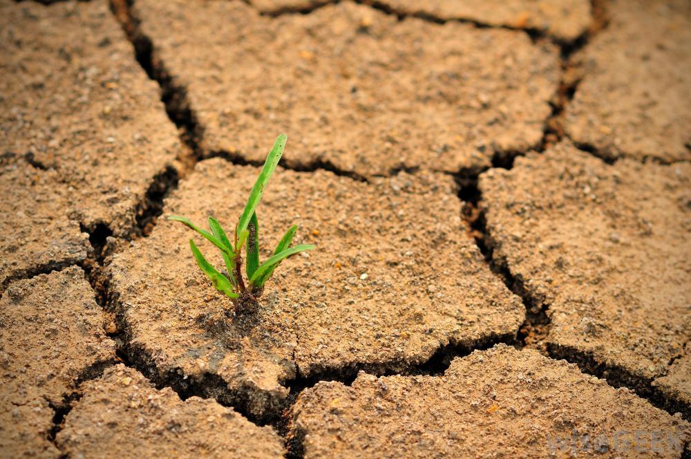 In The Desert clipart desertification Team 2013 April 1 2000